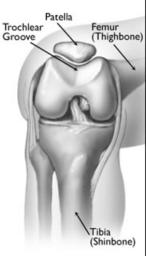 knee-anatomy-trochlear-groove