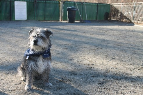 theuglyvolvo dog open letter 0