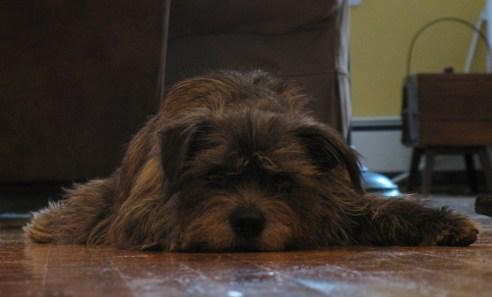 theuglyvolvo dog open letter 7