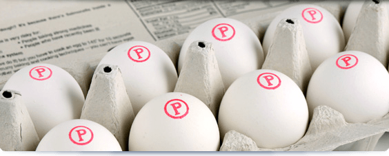 pasteurized-eggs-3