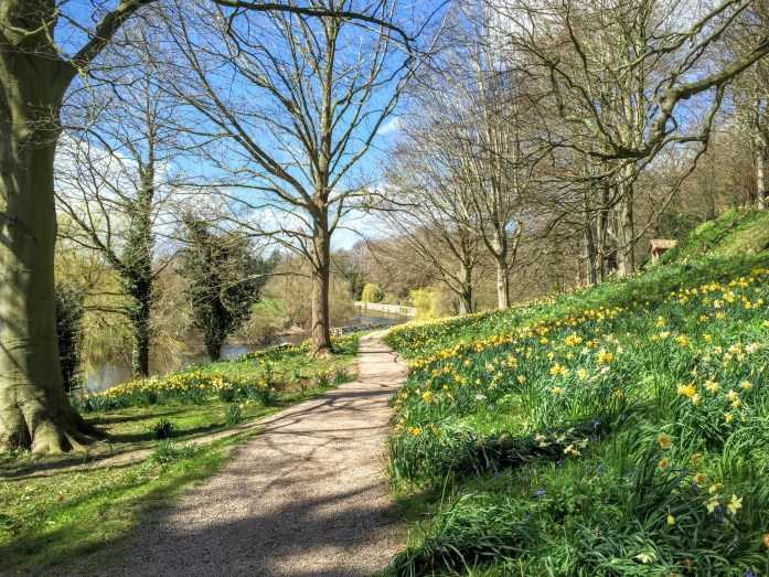 The Weir Garden looking past the daffodils towards the river