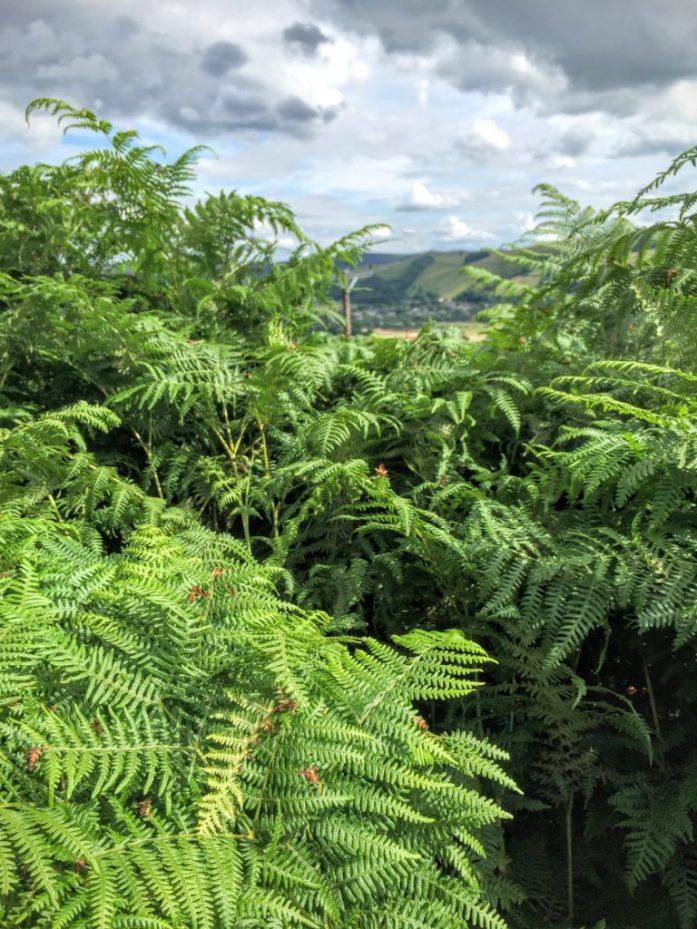 National Trust Peak District Mam Tor