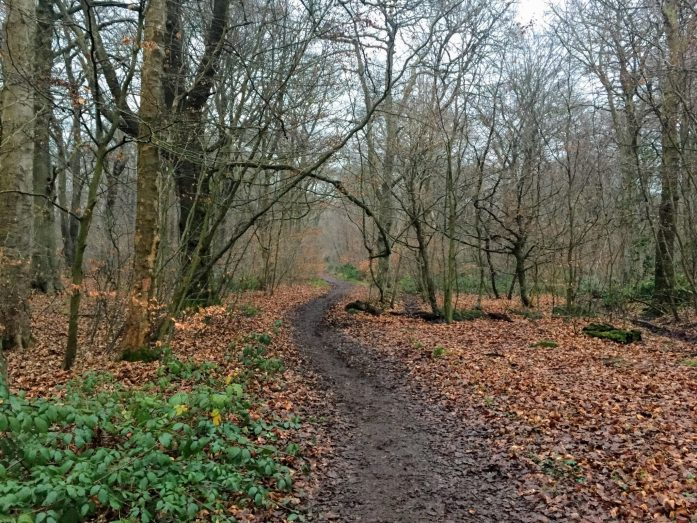 Haigh Hall Country Woodland Park, Wigan, Greater Manchester | The Urban Wanderer | Sarah Irving | Under 1 Hour from manchester | Places to visit near Manchester | Outdoor Blogger | Manchester Blogger