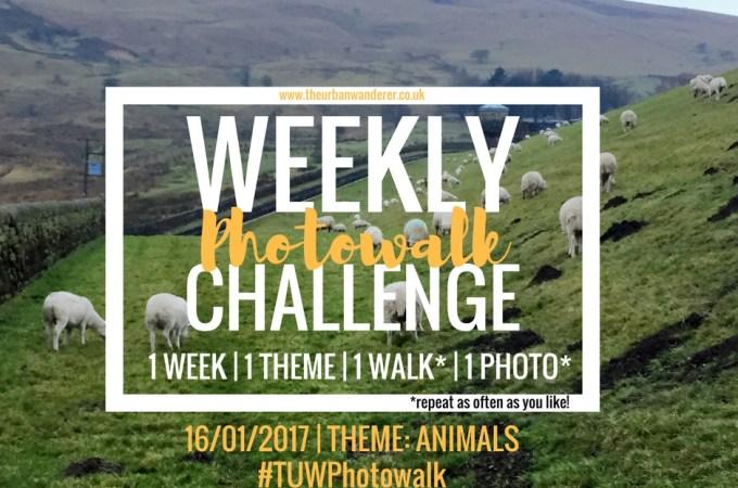 THE URBAN WANDERER WEEKLY PHOTOWALK CHALLENGE | #9 ANIMALS