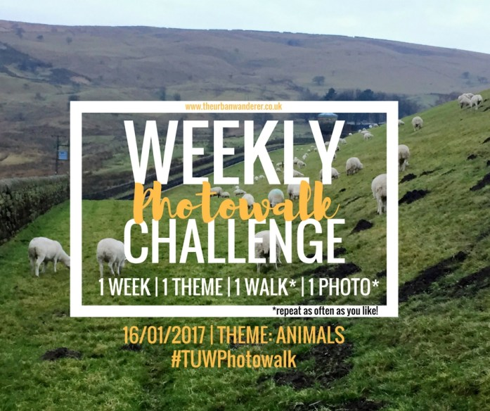 The Urban Wanderer Weekly Photowalk Challenge #9 Animals   Get Outside   Photography Challenge   Explore your area   Sarah Irving The Urban Wanderer   Manchester Blogger Outdoor Blogger   #TUWPhotowalk #lookup #lookupmcr