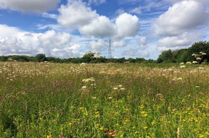 A Wirral Way Wander