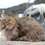 Top 10 Images of the Cats of Tashirojima Island