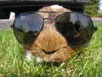 Top 10 Images of Animals Wearing Glasses