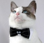 Top 10 Images of Cats Wearing Bow Ties
