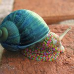Top 10 Most Amazing Images of Snails