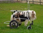 The World's Top 10 Most inspirational Animals in Wheelchairs