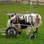 Top 10 Inspirational Animals in Wheelchairs