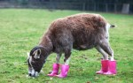 Top 10 Funny Images of Animals in Shoes