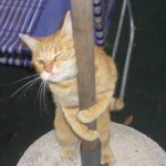 Top 10 Funny Images of Pole Dancing Cats
