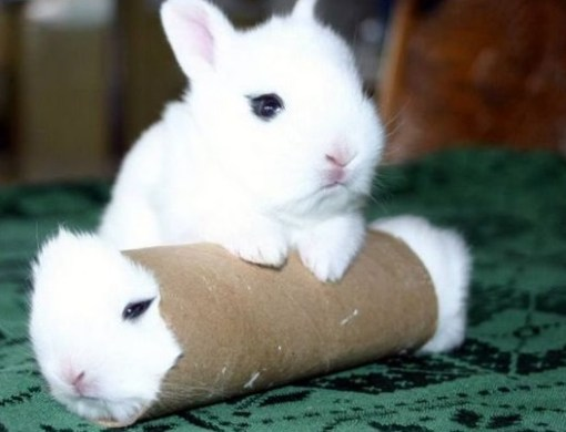 Top 10 Animals Inside Toilet Rolls