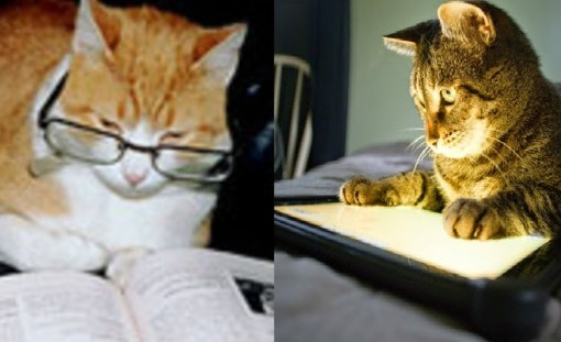Top 10 Examples of Modern Cat Vs Older Cat