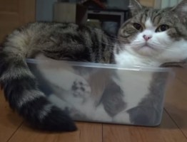 Top 10 Tasty Cats In Sandwich Boxes and Snack Packs