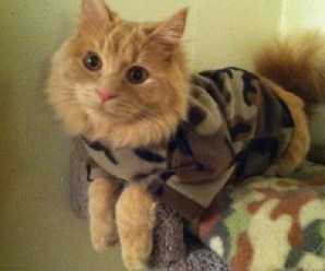 Top 10 Super Tough & Fully Trained Army Cats