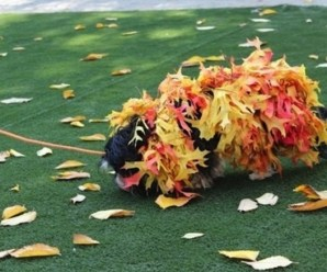 Top 10 Probably Homemade Worse Dog Costumes of All Time
