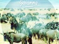 Tobtok – Savanna