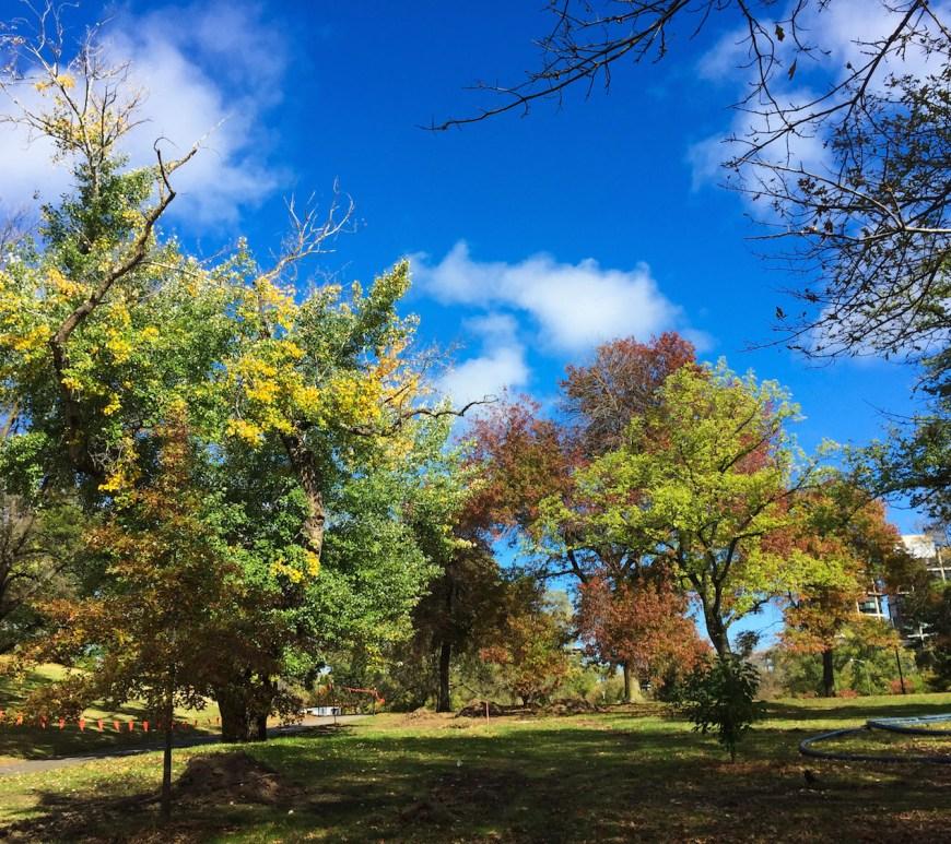 Melbourne's Royal Botanic Gardens in Autumn