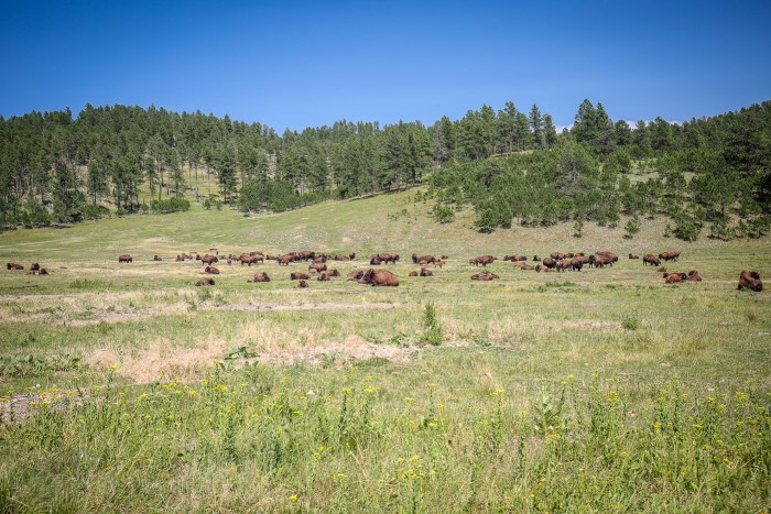 Custer State Park 06