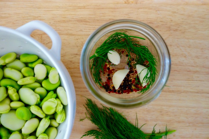 pickled-fava-beans