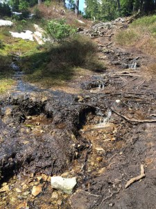 snowmelt turned part of the trail into a muddy stream