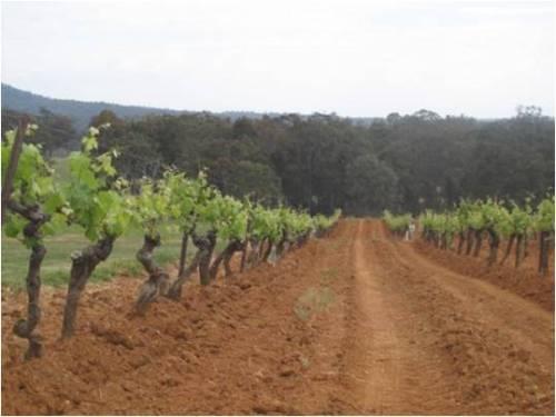 4 acres vineyard