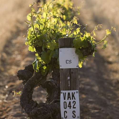 Penfolds Kalimna Vineyard, Barossa Valley - original Cabernet Sauvignon vines were planted around 1888