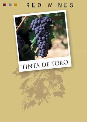 tinta_de_toro