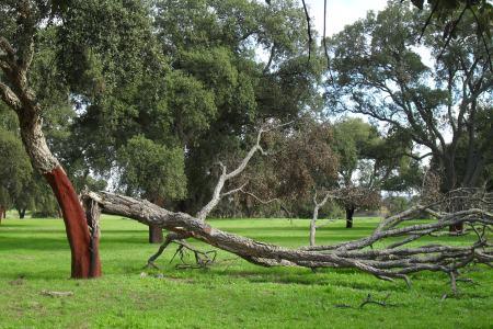 fallentree