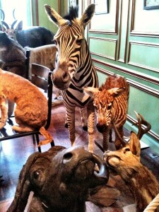 animals in the drawing room