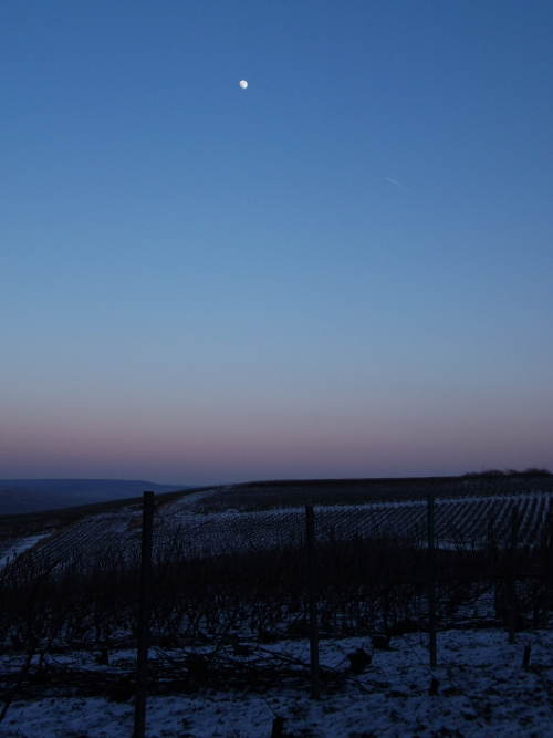 moon over the vines