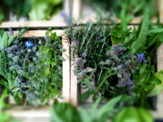 fresh herbs