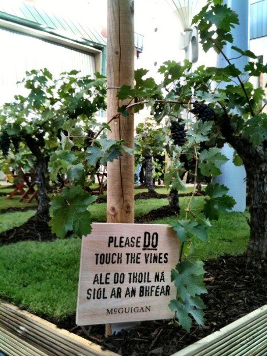try the grapes!