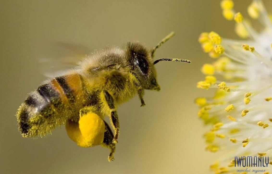 Целебные качества пыльцы