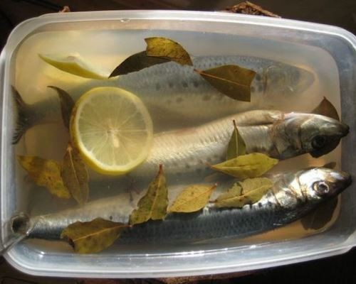 pickled-herring-in-the-home-03