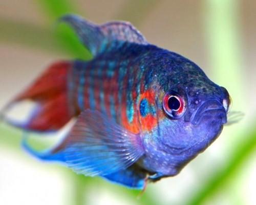 тереть или к чему снится девушке собирать аквариумные рыбки термобелье