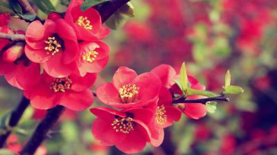30 Beautiful Flower Wallpapers – The WoW Style