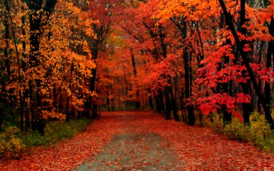 Beautiful Autumn Wallpapers