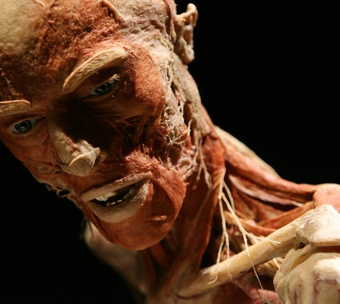 Body Worlds Exhibition Newcastle