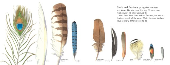 Feathers_p2-3