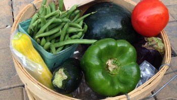 Permalink to: Community Supported Agriculture (CSA)