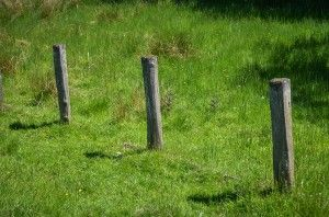 Picture of three posts