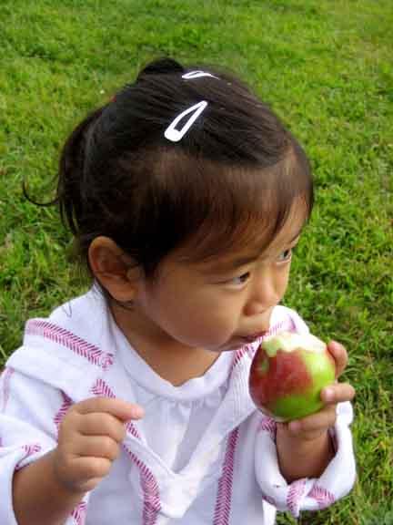 xapplepicking2008sept003.jpg