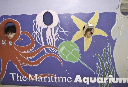 maritime-aquarium-9.jpg