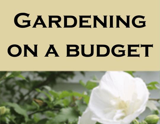 Gardening on a Budget, cheap planters, creative planters, save money gardening