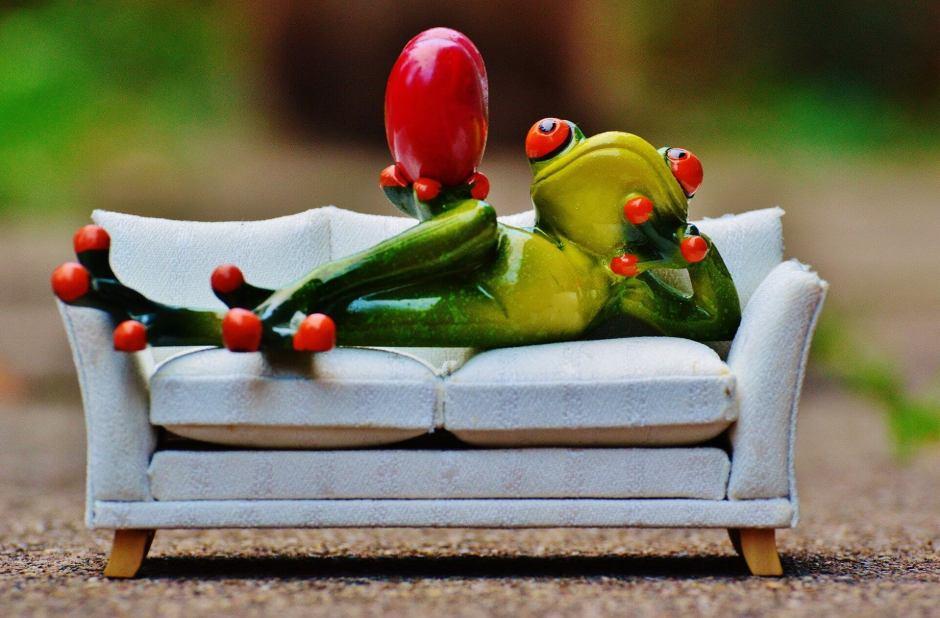 frog-1073346_1920
