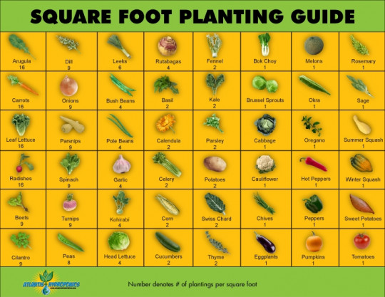 Square Foot Gardening: A Garden for Everyone!